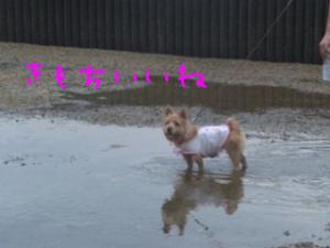 蜀咏悄+(3)_convert_20130716092742