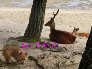 蜀咏悄+(7)_convert_20130716093204