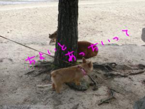 蜀咏悄+(8)_convert_20130716093304