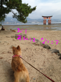 蜀咏悄+(9)_convert_20130716093749