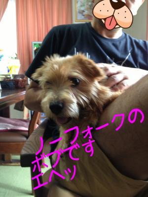 蜀咏悄+(1)_convert_20130727230413