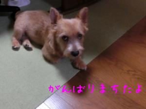 蜀咏悄+2_convert_20130727230659
