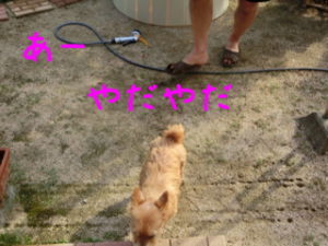 蜀咏悄+1+(3)_convert_20130803191818