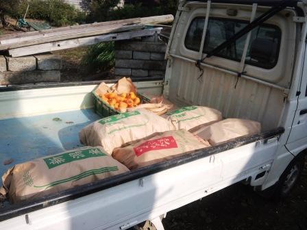 柿の収穫131103b