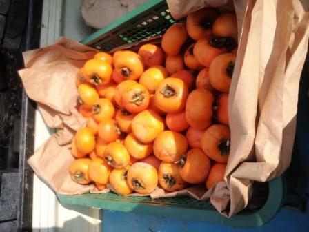 柿の収穫131103a