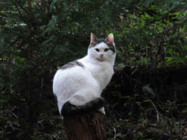 2014年11月21日 伏見稲荷 折れた木の上に鎮座する猫神