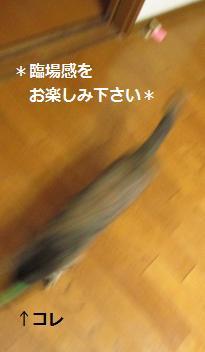2014 1 25ふわボール2
