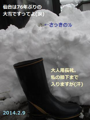 2014 2 9雪2