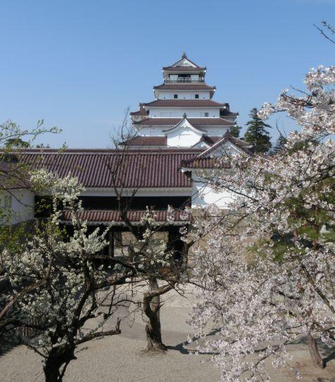 梅と桜が同時に咲く会津・・・ああ、東北なんだなぁと実感。