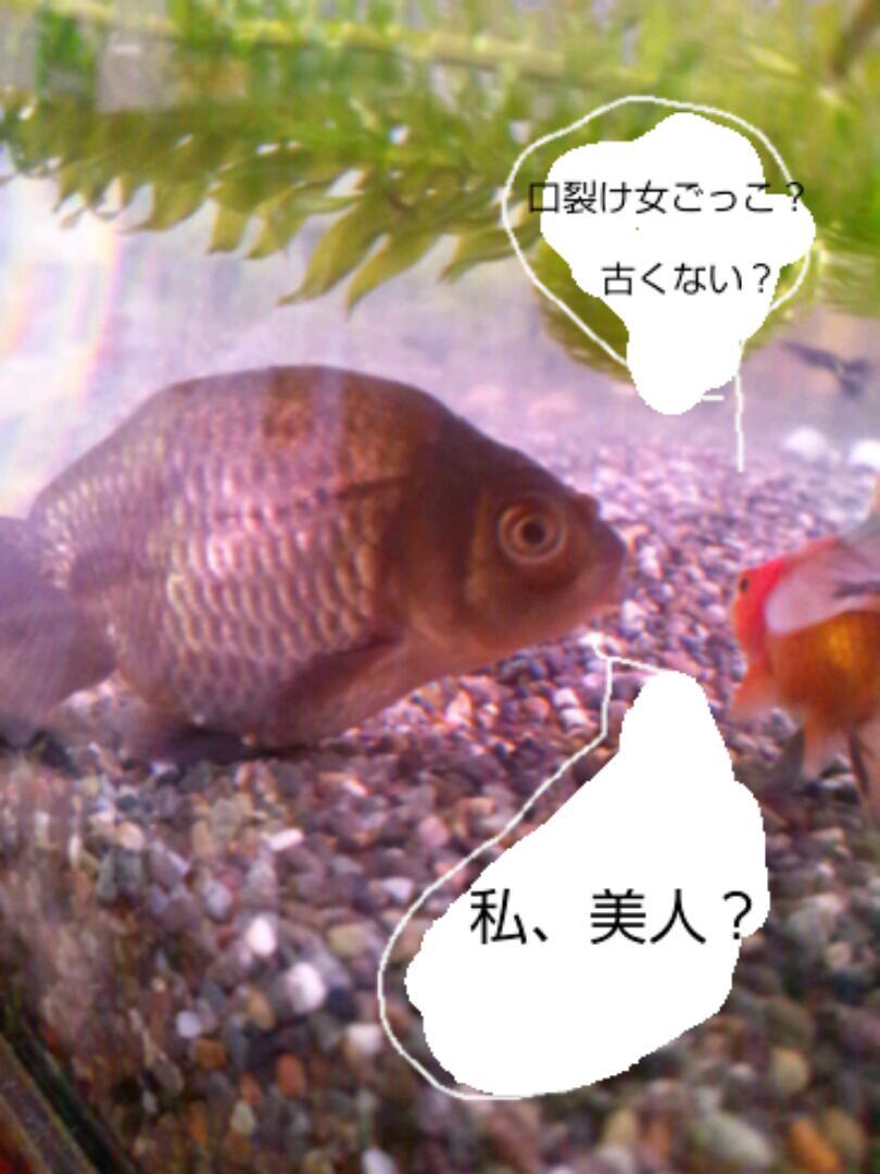 20130509_204923.jpg