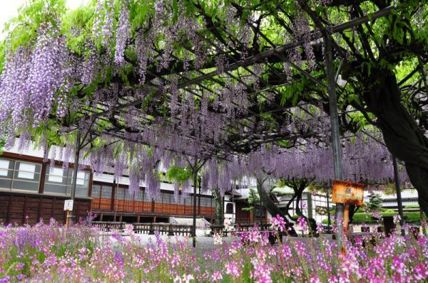 長福寺 2012.05.03