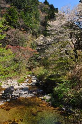 12桜13.04.22