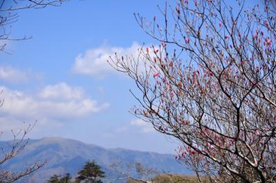 7稲叢山13.04.27