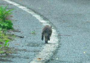 3野ウサギ13.05.10