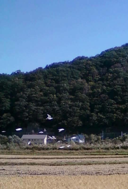 若鳩2013101102