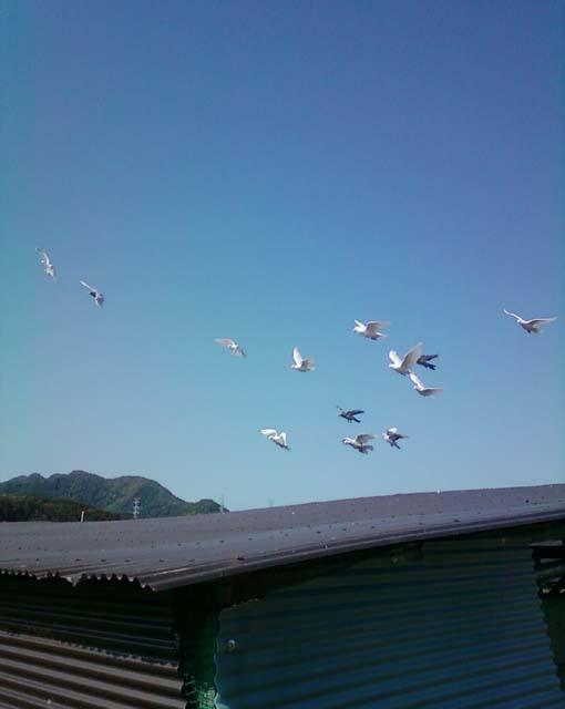 若鳩2013101401
