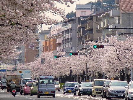 honmokudori03.jpg