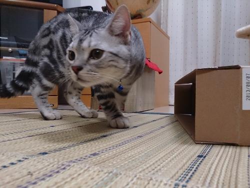 箱にIN1