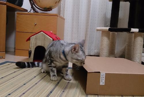 箱にIN2
