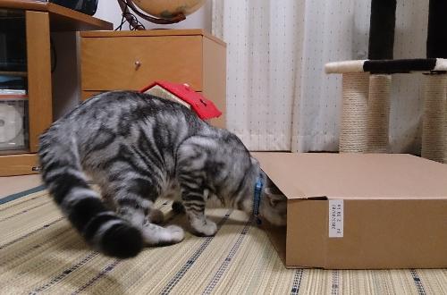 箱にIN3