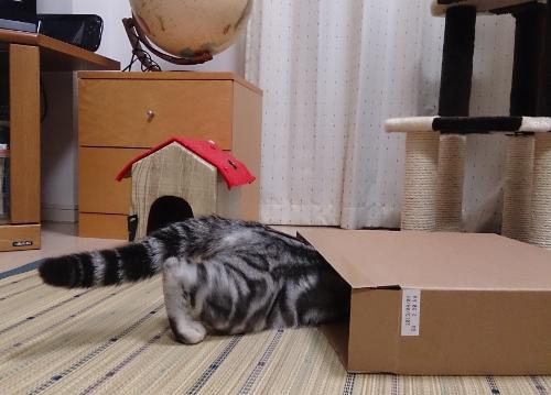 箱にIN4