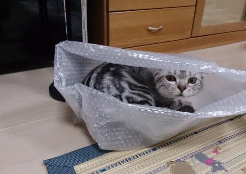 箱にIN7
