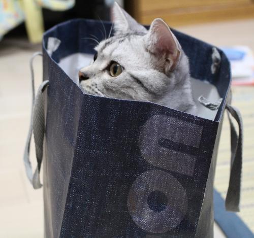 袋にIN6