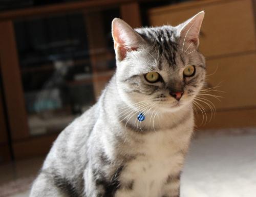 同じネコさんに見えますか1