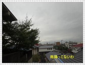 DSC01399.jpg