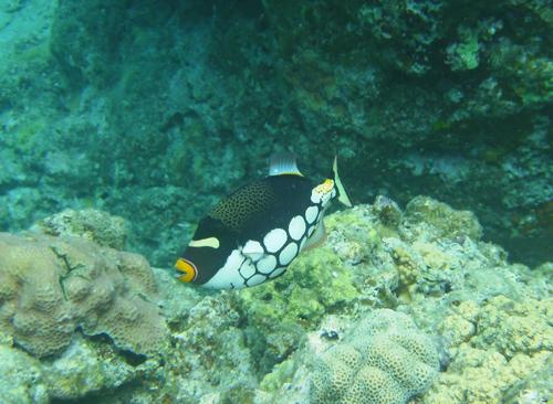 慶良間魚2