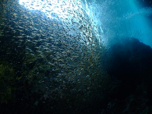 青の洞窟小魚群れ