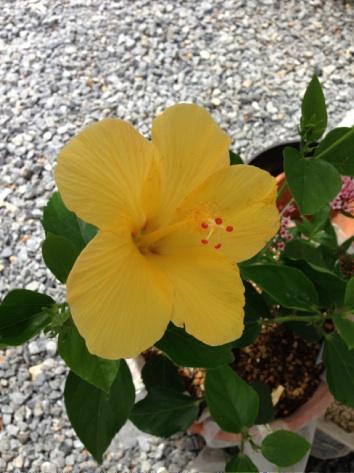 金ちゃんの花2