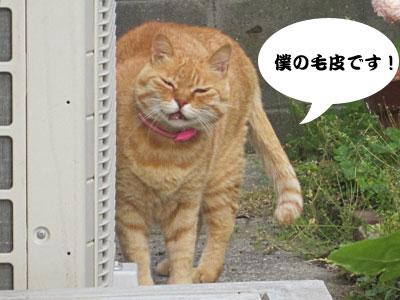 13_05_30_2.jpg