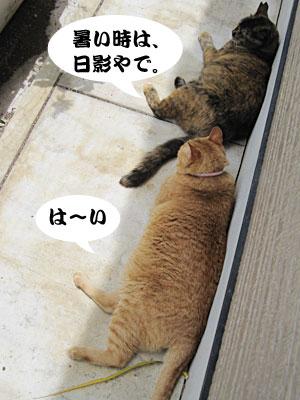 13_06_02_7.jpg