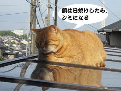 13_06_02_9.jpg