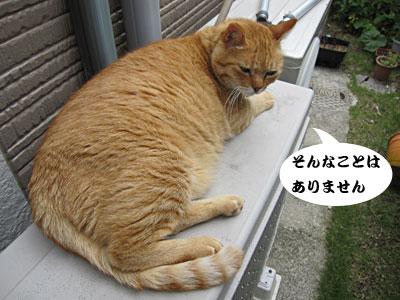 13_06_25_4.jpg