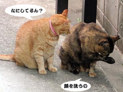 13_07_03_1.jpg
