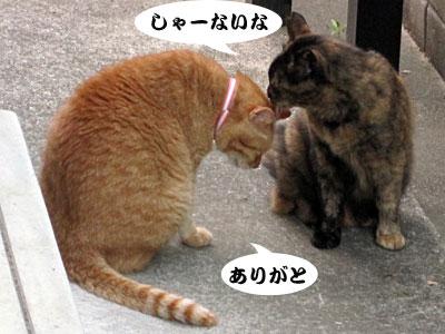 13_07_03_4.jpg