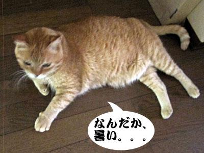 13_07_08_2.jpg