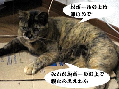13_07_08_4.jpg