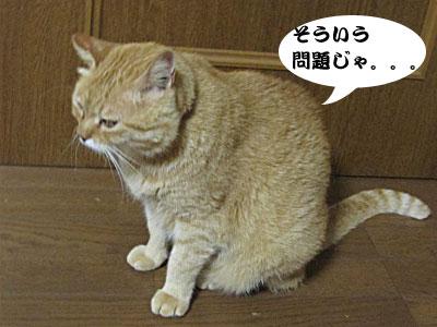 13_07_08_5.jpg