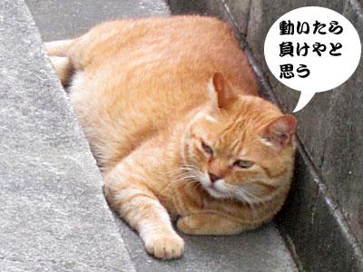 13_07_22_3.jpg