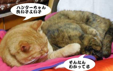 14_11_19_1.jpg