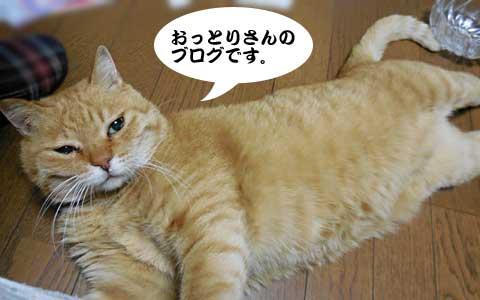 14_11_19_4.jpg