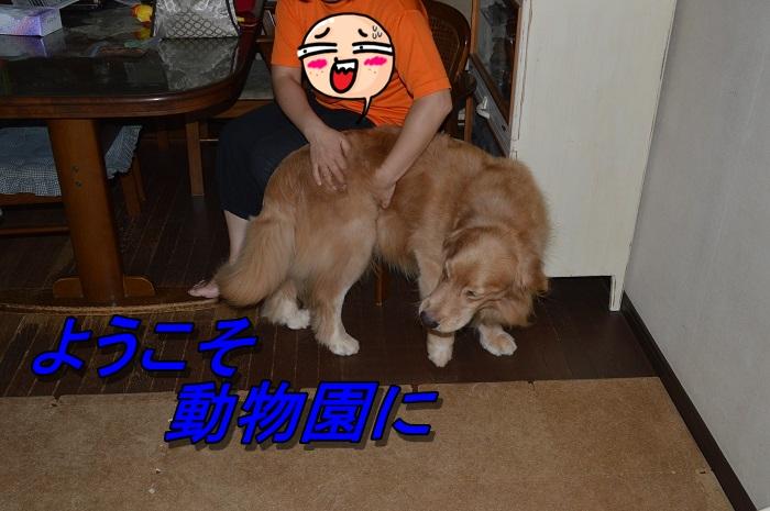 DSC_0026k.jpg