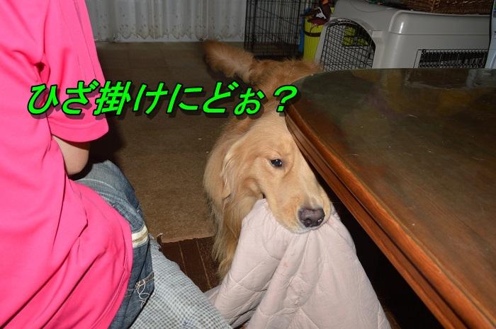 DSC_0029_20130909205939791.jpg