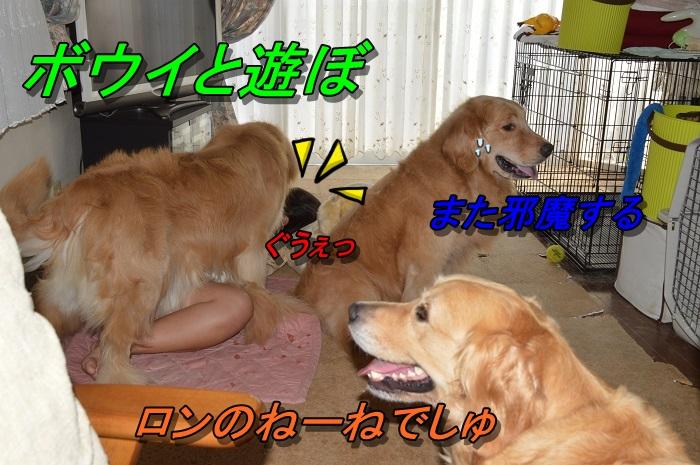 DSC_0039_20130727210513.jpg