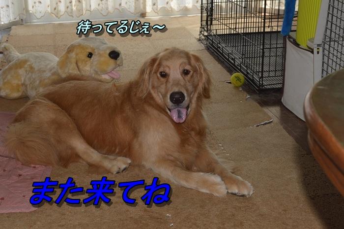 DSC_0041_20130727210618.jpg