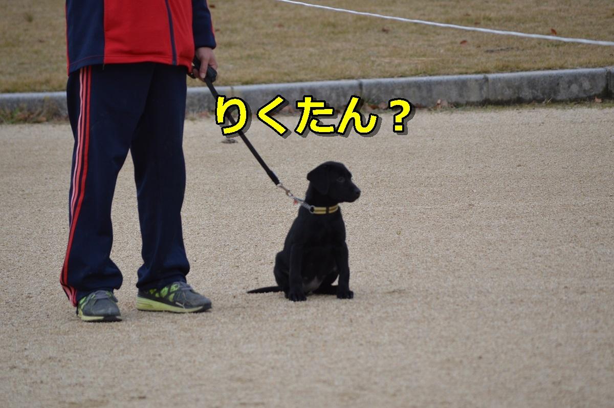 DSC_0045-005.jpg
