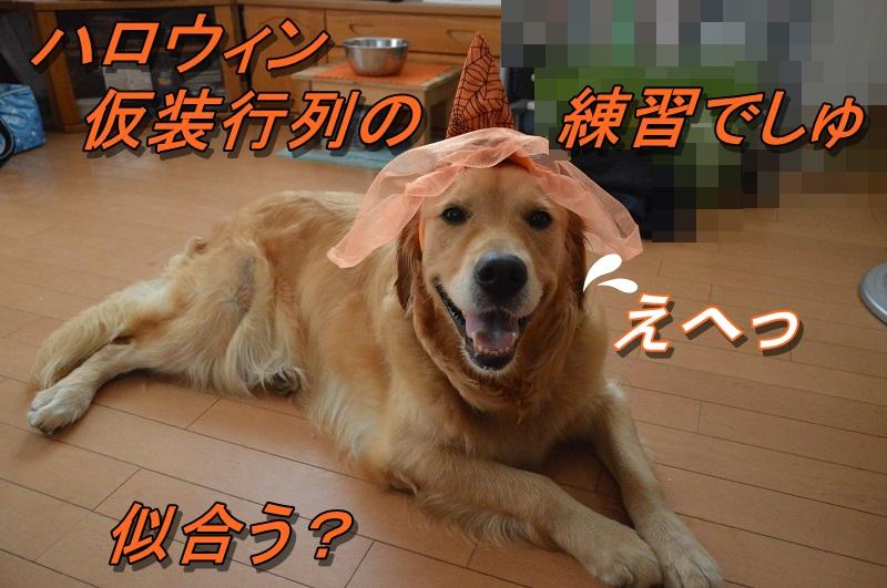 DSC_0063_20130915192857b4f.jpg